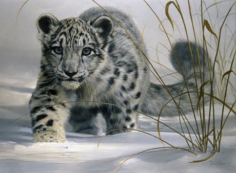 l19f_snow_leopard_cub.jpg